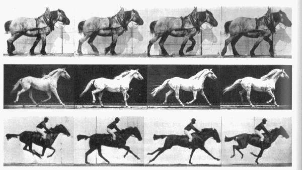 Photo_by_Eadweard_Muybridge_1882.png